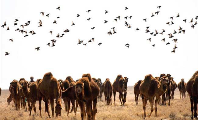 Untitled 3 - گردشگری در گلستان و ترکمن صحرا