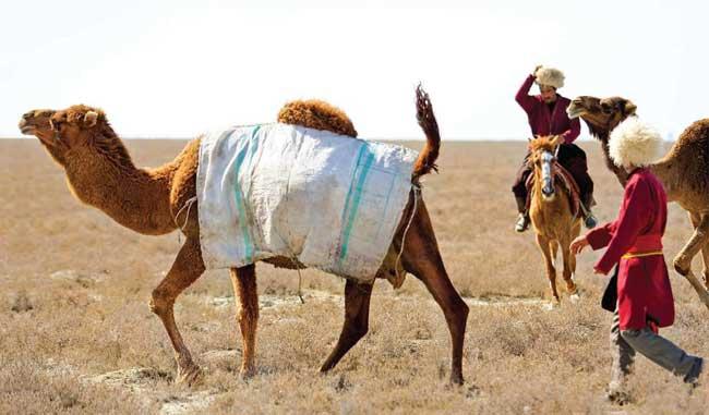 Untitled 6 - گردشگری در گلستان و ترکمن صحرا