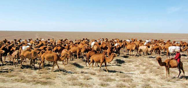 Untitled 7 - گردشگری در گلستان و ترکمن صحرا